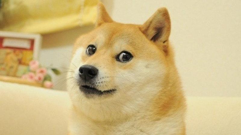 دوج کوین یک شوخی میلیاردی !