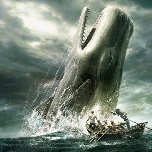 نهنگها چگونه سرمایهها را میبلعند؟