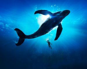 نهنگ ژاپنی 400 میلیون دلار بیت کوین فروخت و این آغاز راه است