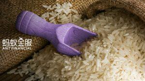 دولت چین برای رهگیری برنج از بلاک چین استفاده میکند