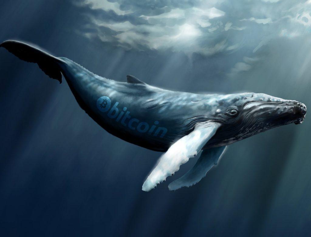 Bitcoin Whales and How They Make Market Wave 1024x781 - گنجینههای اسرار؛ ۹ آدرس کیف پول معروف بیت کوین