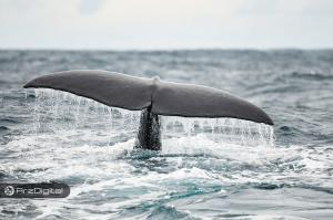نهنگ ناشناس ۲۵۷ میلیون دلار بیت کوین را انتقال داد !