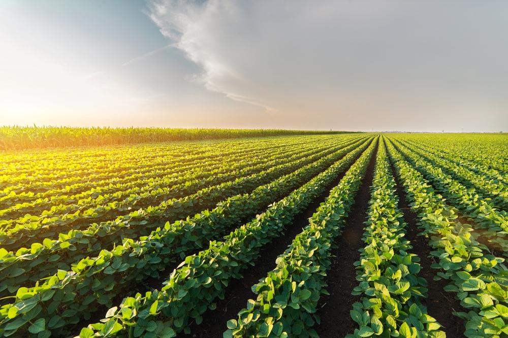 ۱۷ هزار کشاورز کنیایی تحت پوشش شرکت بیمهای مبتنی بر بلاک چین قرار گرفتند