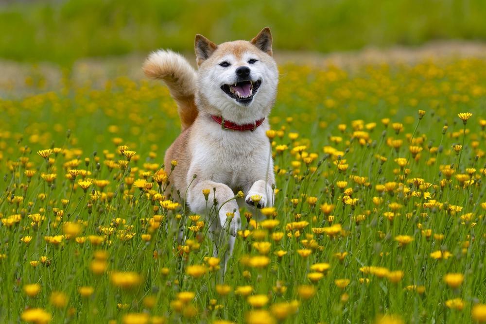 دوج کوین Dogecoin چیست؟ هر آنچه باید درباره این ارز دیجیتال بامزه بدانید
