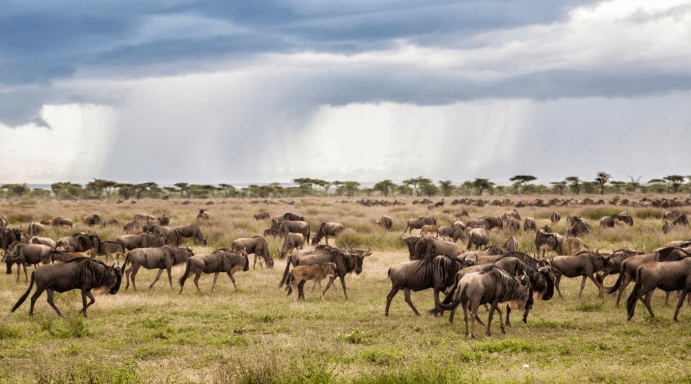 تانزانیا