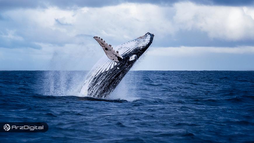 افزایش شدید فعالیت نهنگهای بیت کوین/ باید منتظر چه اتفاقی باشیم؟