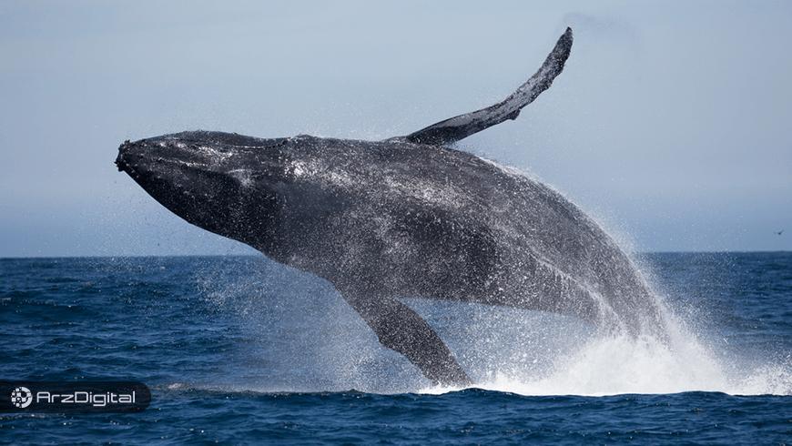 نهنگهای بازار بیدار شدهاند/ انتقال 600 میلیون دلار بیت کوین در 24 ساعت گذشته