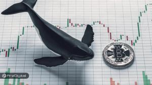 فعالیت نهنگها چه خبر خوب و بدی برای بازار بیت کوین دارد؟