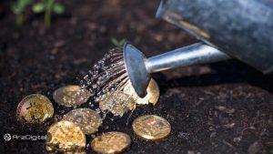 درخت بیت کوین – بخش چهارم: باغبانی
