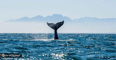 نهنگ بیت کوین