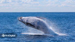نتیجه جنجالی یک تحقیق: رشد شدید بیت کوین در سال 2017 کار یک نهنگ بوده است