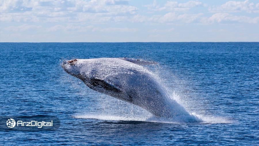 نتیجه جنجالی یک تحقیق: رشد شدید بیت کوین در سال ۲۰۱۷ کار یک نهنگ بوده است