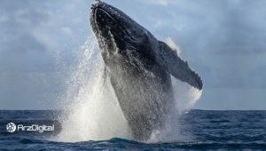 نهنگهای بیت کوین در حال اتحاد؛ منتظر نوسانهای بیشتری باشید