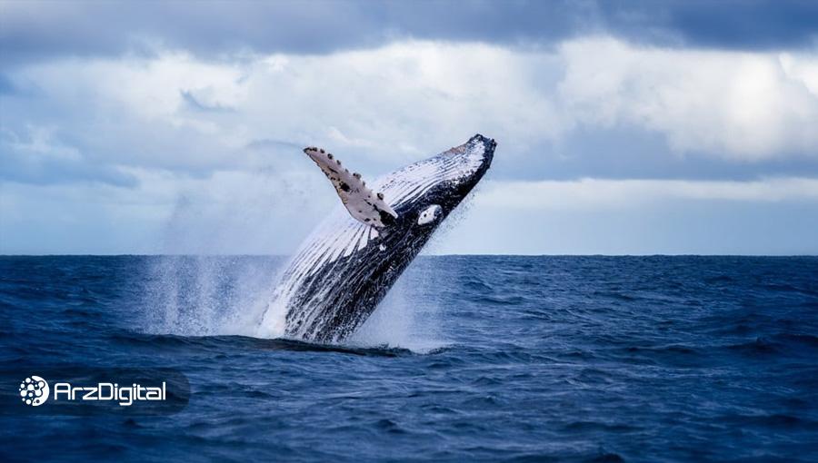 تعداد نهنگهای بیت کوین به بالاترین میزان دو سال اخیر رسید