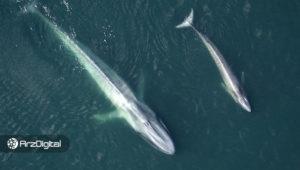 دادهها نشان میدهد نهنگها علاقهای به فروش بیت کوین در قیمتهای فعلی ندارند