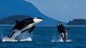 تعداد نهنگهای بیت کوین به سطوح سال ۲۰۱۷ رسیده است