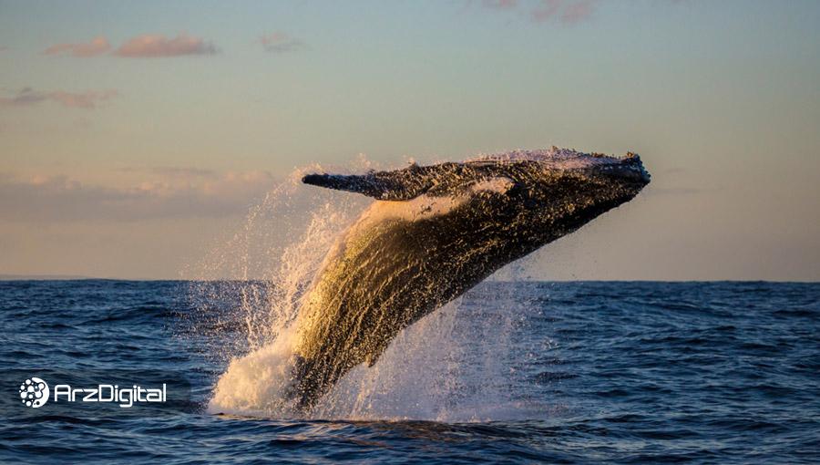 نهنگی در یک صرافی غیرمتمرکز قیمت اتریوم را به ۴۵۰ دلار رساند