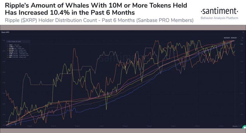 نهنگهای بازار ریپل
