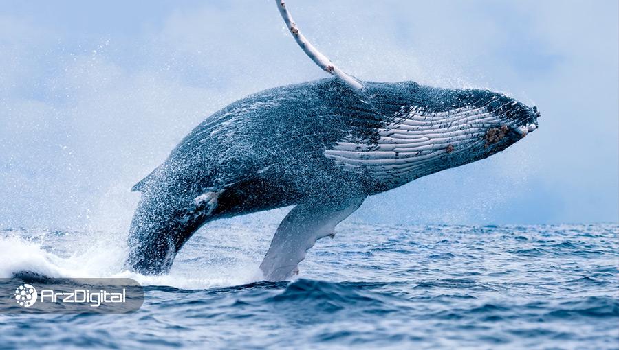 نهنگهای بیت کوین در اوج قیمت بیش از ۱۴۰,۰۰۰ بیت کوین فروختهاند