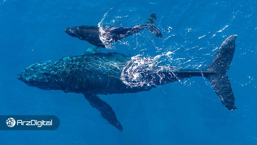 دو نهنگ ناشناس بیش از ۱ میلیارد دلار بیت کوین را از صرافی کوین بیس خارج کردند