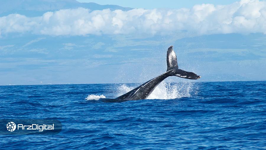 موجودی نهنگها به بالاترین سطح خود در ۲ ماه اخیر رسید؛ نشانهای برای صعود؟